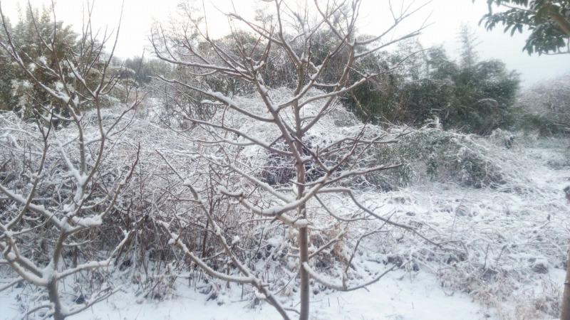 この日の雪景色