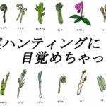 山菜初心者アイキャッチ