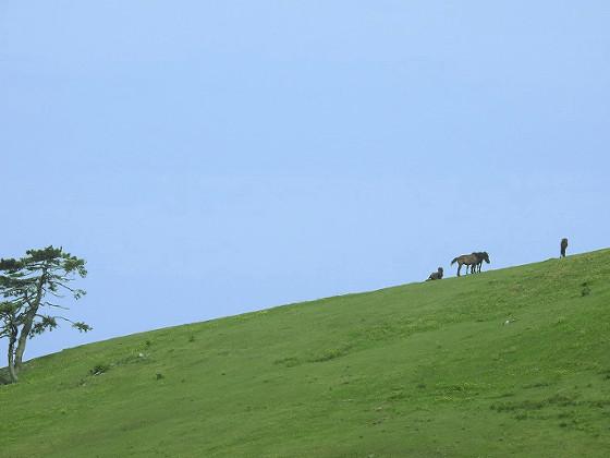 遠くから御崎馬を撮影