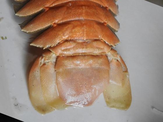 パッチンエビ(ウチワエビ)の尻尾