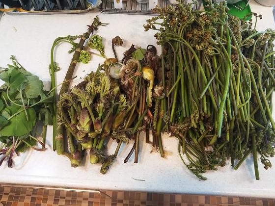 採れた山菜たち