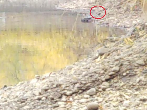 ヌートリアを獲った池