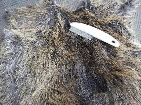 ペット用のクシで毛並みを整える