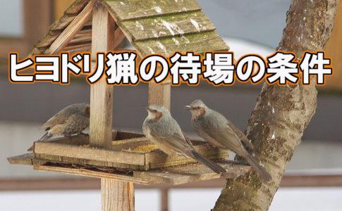 ヒヨドリ猟待場 アイキャッチ