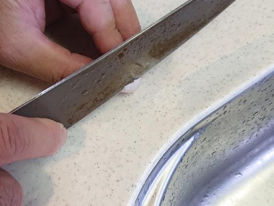 スッポンの卵の殻を切る