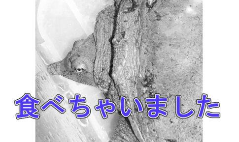 スッポン唐揚げアイキャッチ